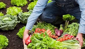 Salud y alimentación-ecología dooko-vivienda nueva Villena-Tu hogar singular-Edificio Purpura